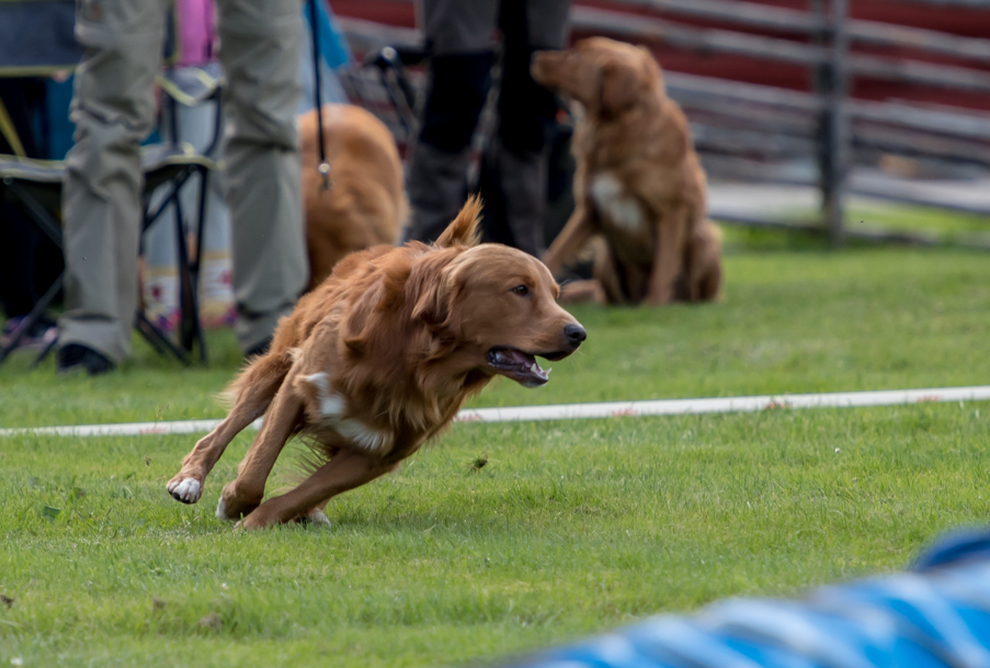 tollare-agility-73