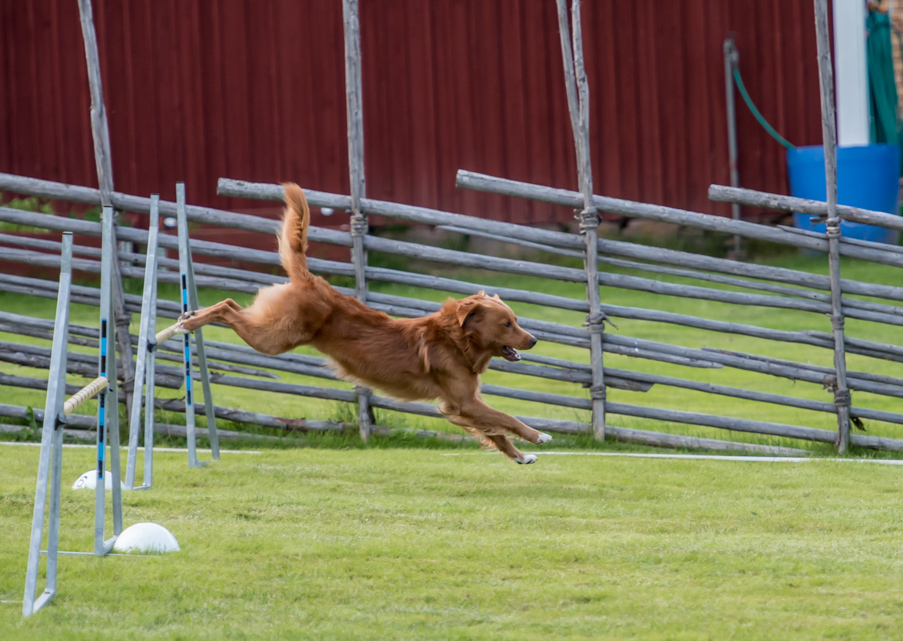 tollare-agility-75