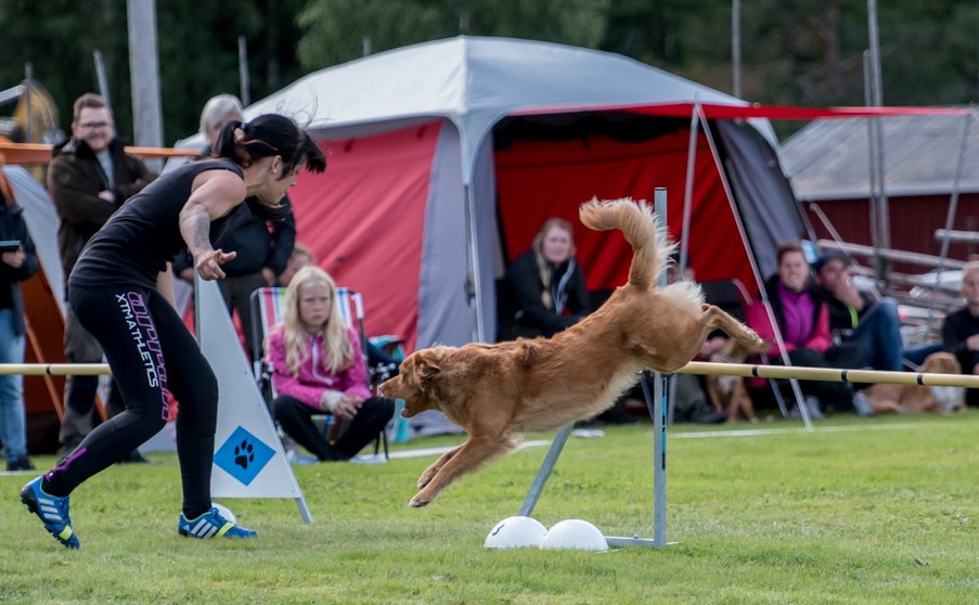 tollare-agility-77