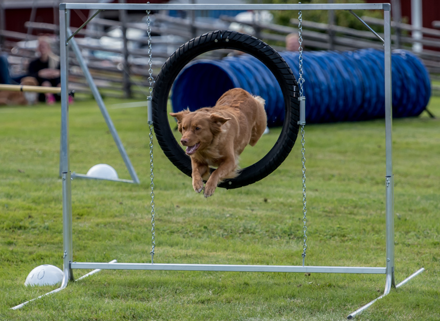 tollare-agility-79