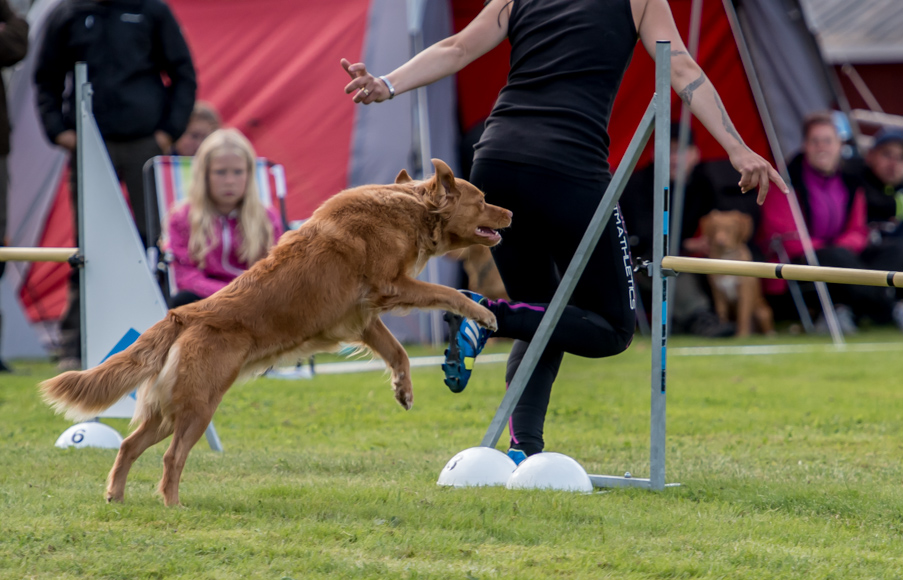 tollare-agility-81