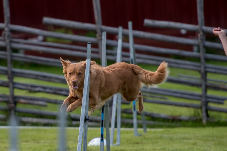 tollare-agility-82