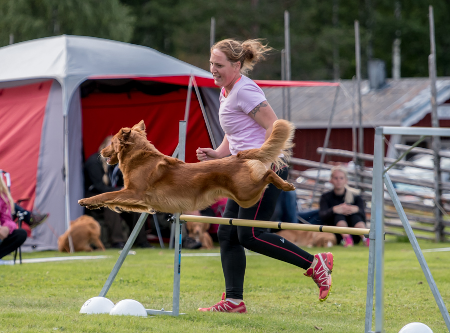 tollare-agility-83
