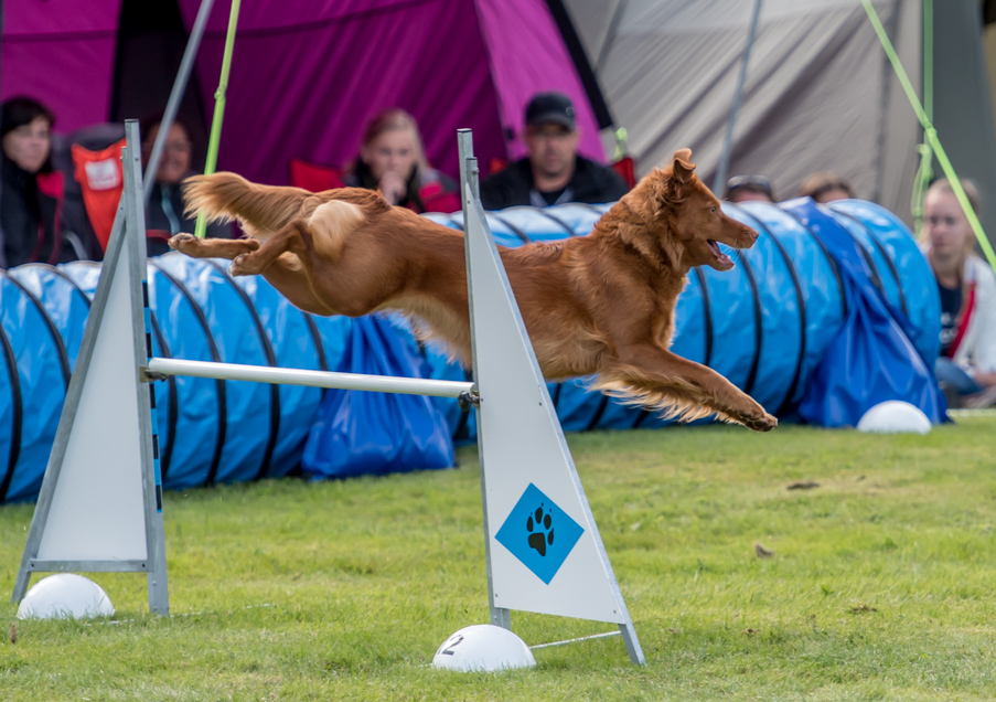 tollare-agility-85