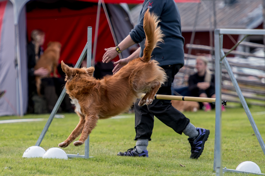 tollare-agility-88