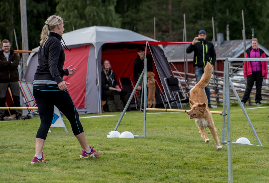 tollare-agility-9