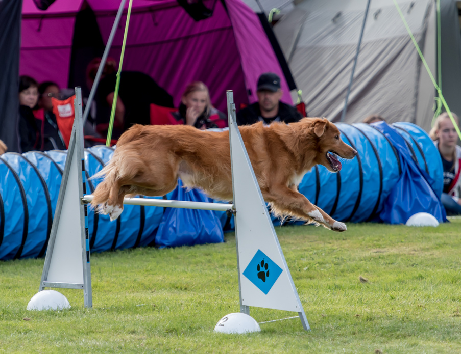 tollare-agility-92