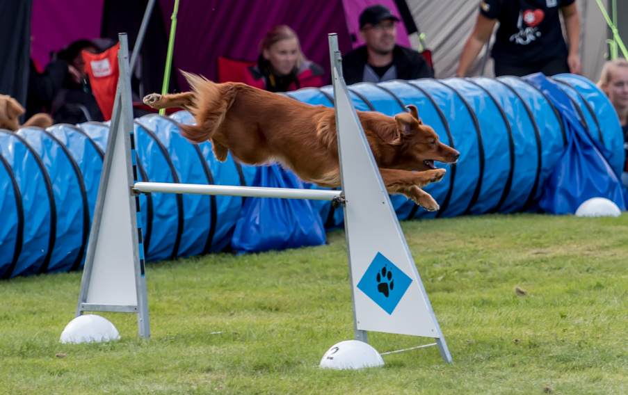 tollare-agility-96
